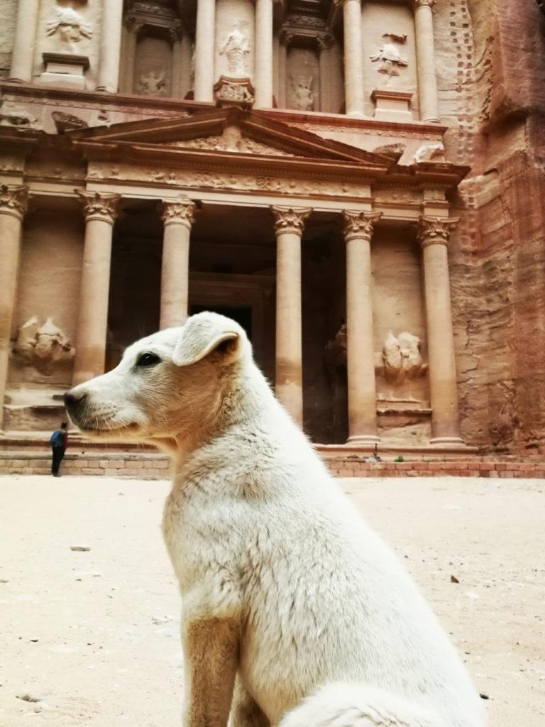 Jordania Petra - szczeniak przy skarbcu